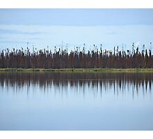 Burned Forest Lake (Anchorage, Alaska) Photographic Print