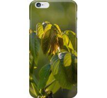 Walnut leaves iPhone Case/Skin
