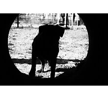 Dog silhouette Photographic Print