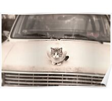 cat needs a ride Poster