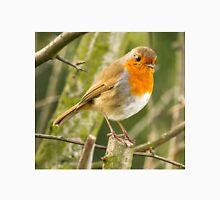 Beautiful Robin Redbreast Bird Unisex T-Shirt