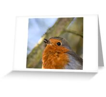 Robin Singing Greeting Card