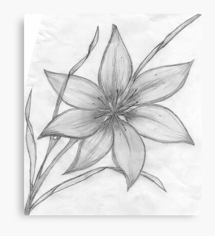 Lily,Pencil Drawing,  Canvas Print