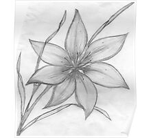 Lily,Pencil Drawing,  Poster