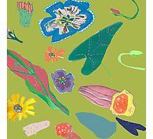 Olive Garden Nature Photographic Print