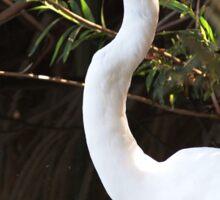 Egret at Sepulveda Basin Wildlife Reserve Sticker