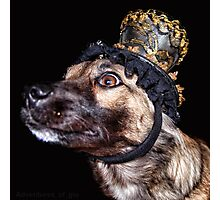 Mardi Gras Puppy 1 Photographic Print