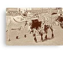 Cattle Drive 3 Canvas Print