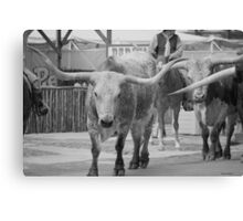 Cattle Drive 5 Canvas Print