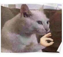 Fleek cat Poster