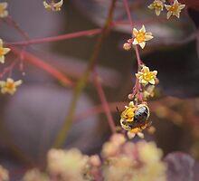 Ball of Pollen  by Tracy Friesen