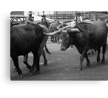 Cattle Drive 7 Canvas Print