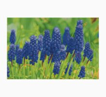 Muscari - Impressions Of Spring Baby Tee
