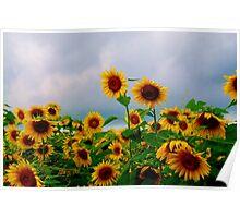 clemson sunflowers part 2 Poster
