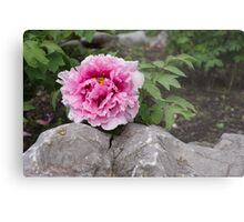 Peony on the Rocks - the Marvels of Spring Metal Print