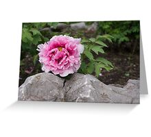 Peony on the Rocks - the Marvels of Spring Greeting Card