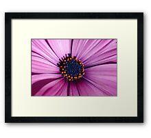 Blue Eyed Daisy Framed Print