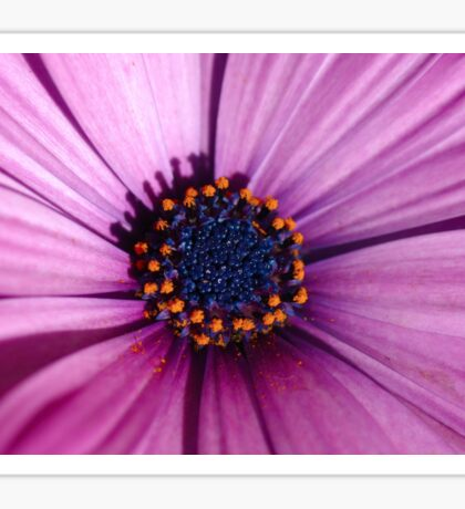Blue Eyed Daisy Sticker