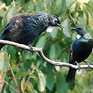 Tui...... ' When I go son,  this throne will be all yours '.........! by Roy  Massicks