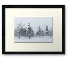 Snowstorm - Tall Trees and Whispering Snowflakes Framed Print