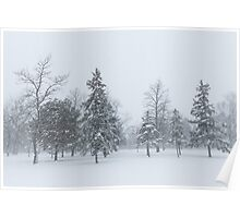 Snowstorm - Tall Trees and Whispering Snowflakes Poster