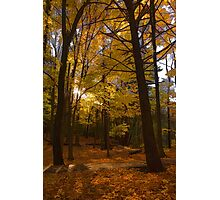 Autumn Forest Glow - Impressions Of Fall Photographic Print
