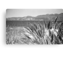 A Lake through the Grass Canvas Print