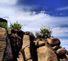 Balsamroot Rock Garden by Don Siebel