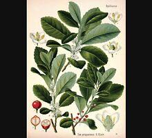 Köhler's Medizinal Pflanzen in naturgetreuen Abbildungen mit kurz erläuterndem Texte  Atlas zur Pharmacopoea 1883 1914 V3 060 Ilex Paraguariensis Unisex T-Shirt