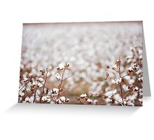Cotton Field in Oakey Greeting Card