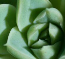 Petalled Succulent - Agave Sticker