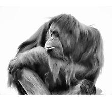 Orangutan in Black & White Photographic Print