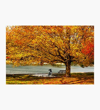 Golden maple warm me up  Photographic Print