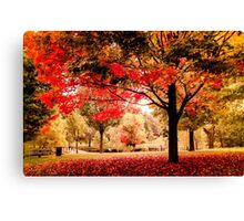 Red Maple in Larz Anderson park. Canvas Print