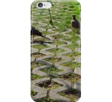 Pigeons on the pavement and grass in the park. iPhone Case/Skin