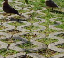 Pigeons on the pavement and grass in the park. Sticker