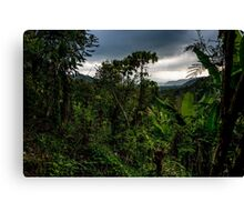 Tropical rainforest - jungle Canvas Print