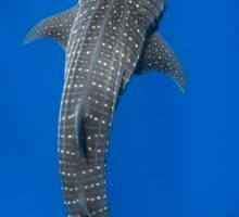 Whale Shark - A Gentle Giant Sticker