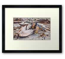 Snack Time for the Coconut Crab Framed Print