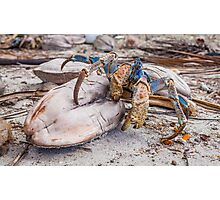 Snack Time for the Coconut Crab Photographic Print