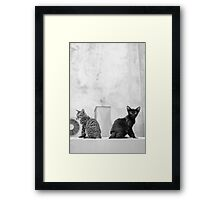 Young Cats Buddy, Back to Back Framed Print