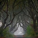 Dark Hedges by DesDaly