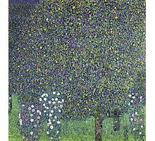 Gustav Klimt - Roses Under The Trees-   Gustav Klimt - Landscape Photographic Print