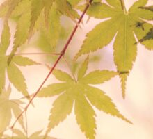 Green leaves of Japanese maple - vintage styleⅡ Sticker