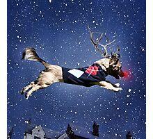 Reindeer Pup Photographic Print