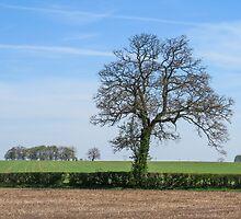 A Cotswold landscape by Jeff  Wilson