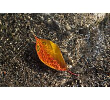 Autumn Colors and Playful Sunlight Patterns - Cherry Leaf Photographic Print