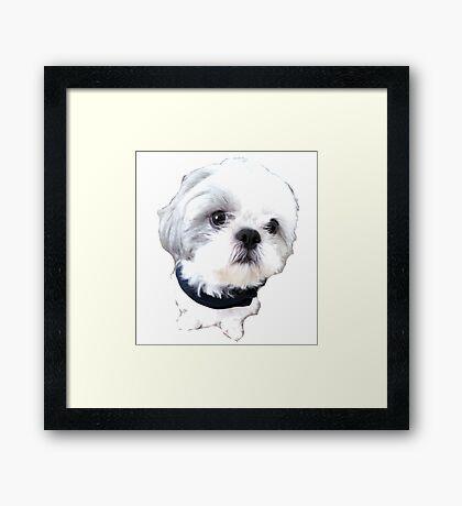 Shih Tzu - Coolest Sir Framed Print