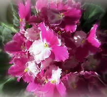 My African Violet by AuntDot