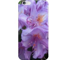 (3) Hampstead Purple, Lilly Delight iPhone Case/Skin